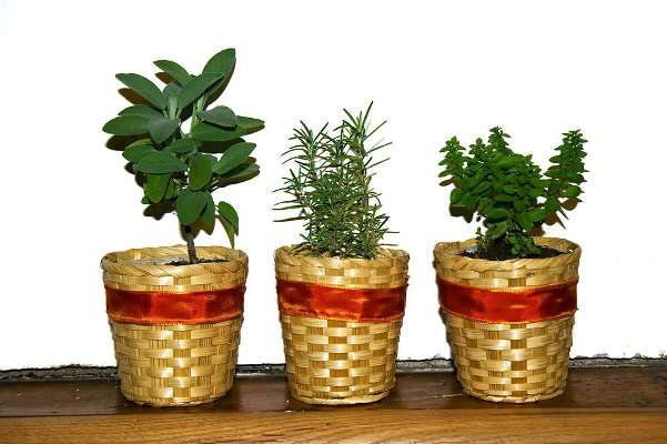 herbs dhi